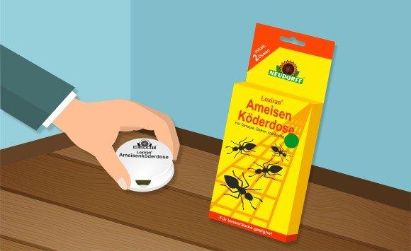Ameisenköderdose zur Bekämpfung von Ameisen in der Wohnung