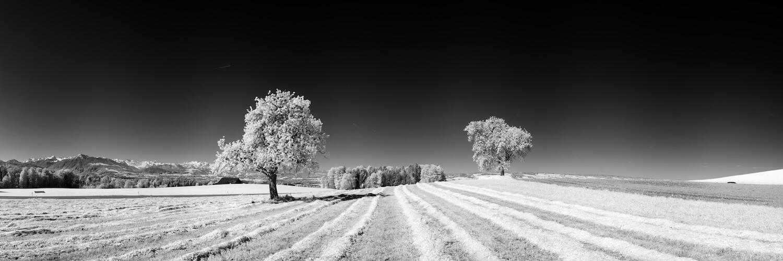 Bild: Zwei Weisse: Schwarz weisse Landschaft mit Bäumen