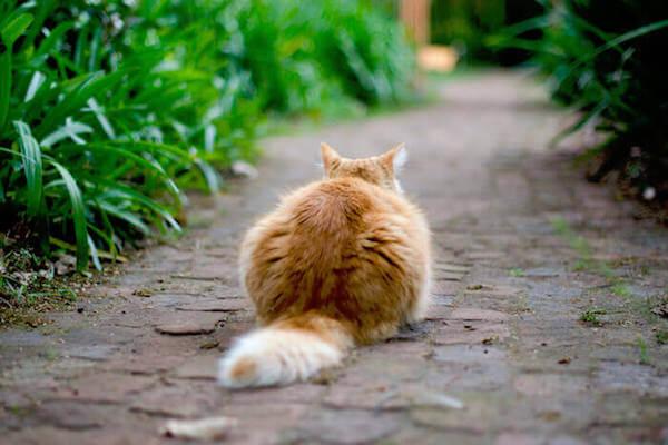 Un chat devant la porte
